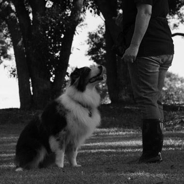 obedience dog training