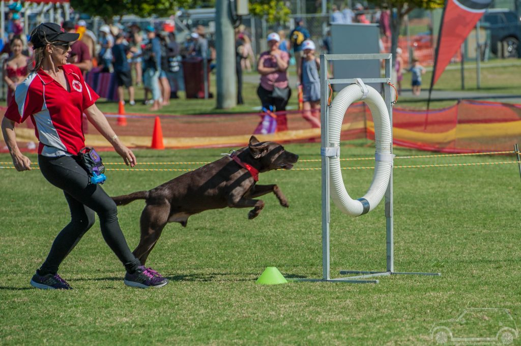 Agility Dog Winston with Sonia